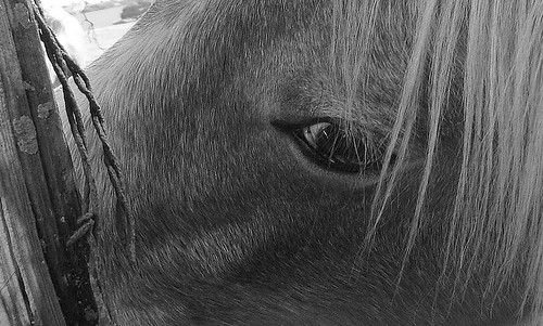 horse, looking