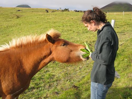 Feeding the pony dandelion greens