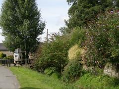 Aston Arbour Tree