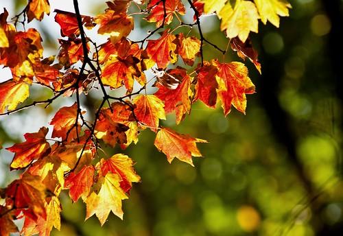 Fall Break Oct. 21st 2 of 4