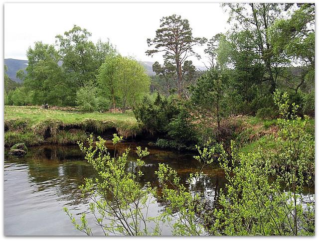 Abhain Ruigh-eunachan burn, Glenmore