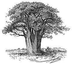 Tree / Árvore por CGoulao
