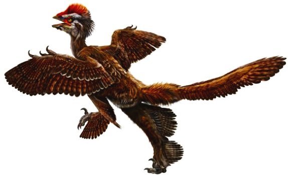 anchiornis_recon