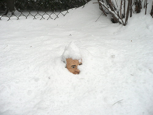 Gorby in snow