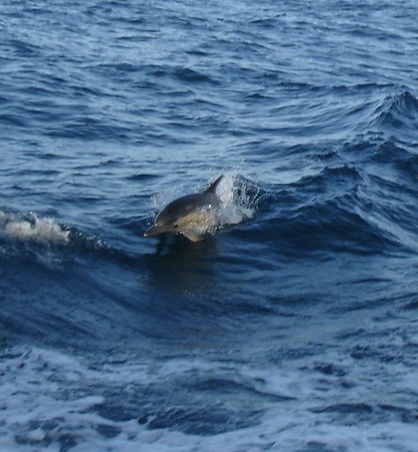 Common Dolphins are total morning people