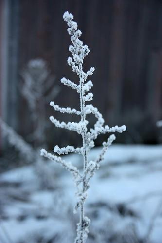 All frozen