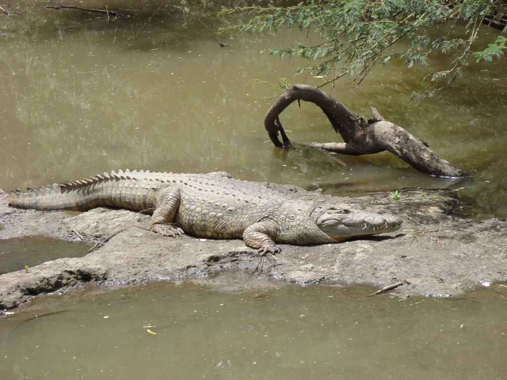 Predators of Nairobi National Park
