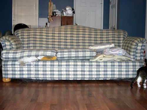 Nasty old sofa, plus a little cat butt.