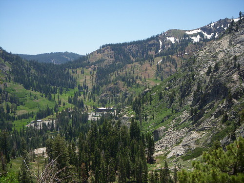 Alpine Meadows in July