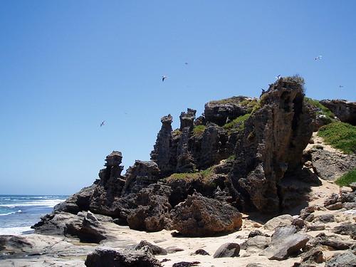 Australia Day on Penguin Island