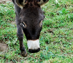 Donkey! in Valle Crucis, NC