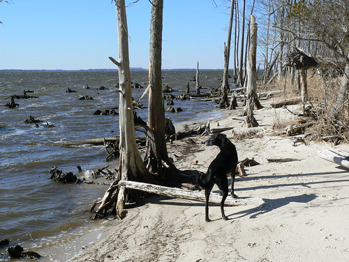 Camden County Jeep Trail - Jimmie on Private Beach