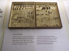 Darwins beetle box, University Museum of Zoology, Cambridge