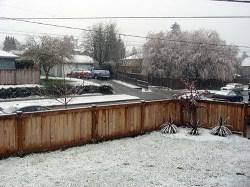 snowfall?
