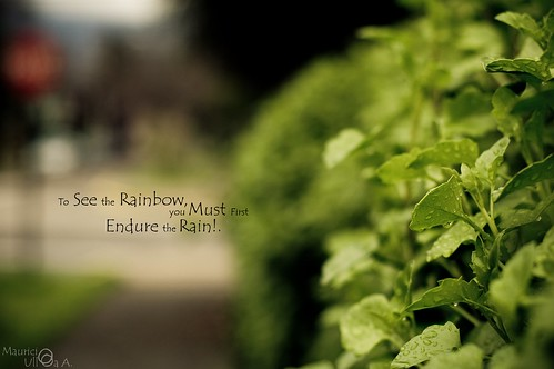 To See the Rainbow, you Must First Endure the Rain!.