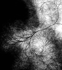 neuron fractal 4