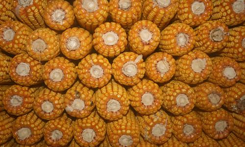 É tempo de millo