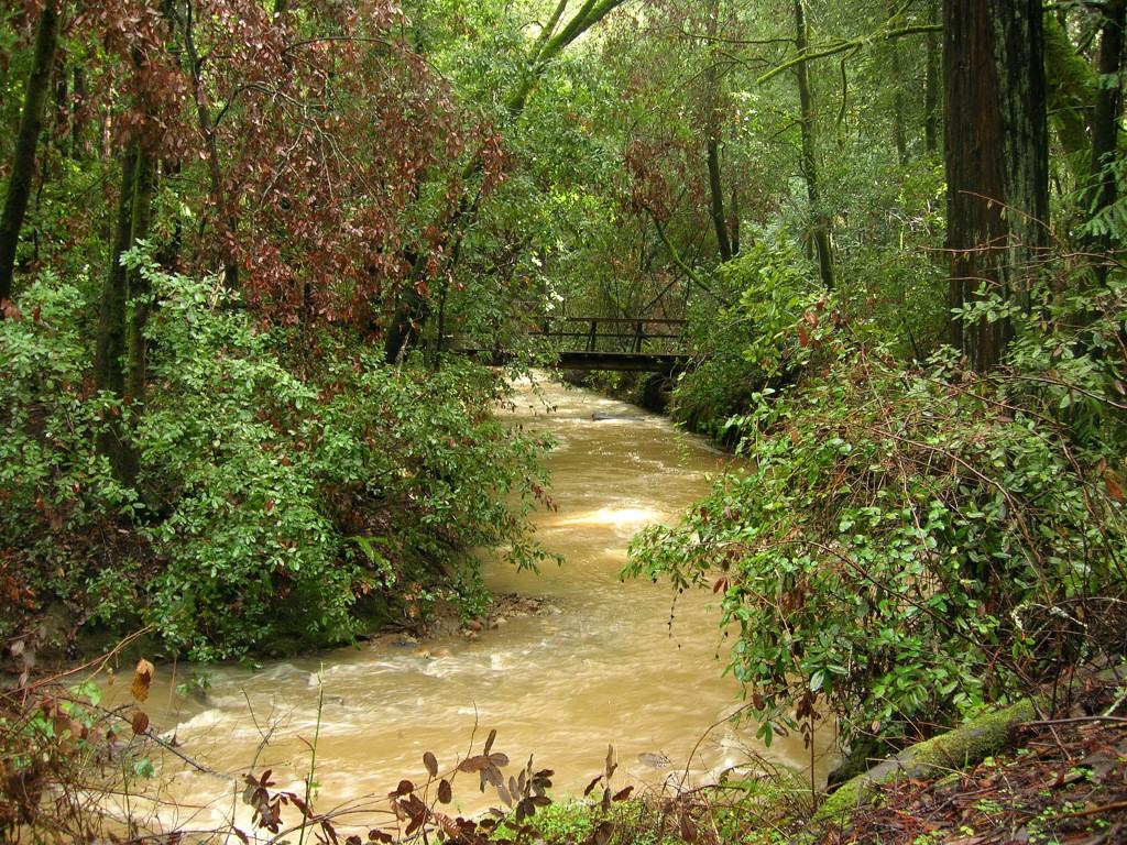 Bridge over McGarvey Gulch Creek