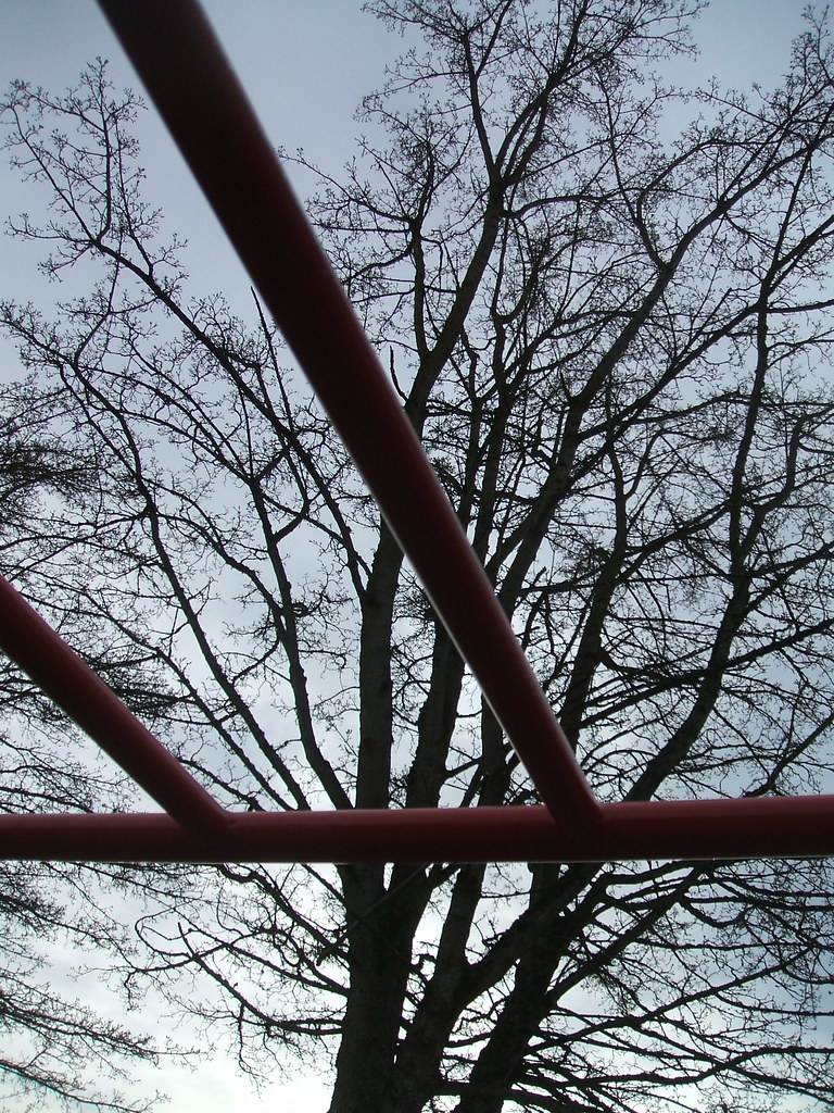 Park Tree Through Monkey Bars