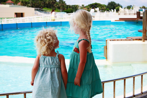 Dolphin Pool Sisters