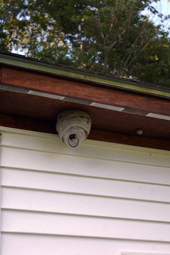 Wasp Nest on the Garage