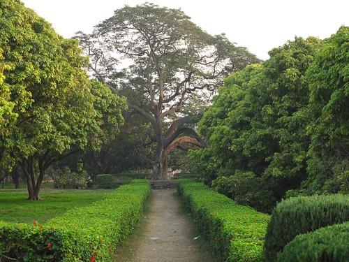 Pinjur Garden