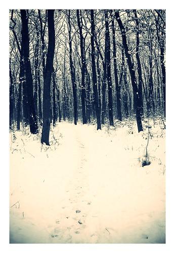 winterr2