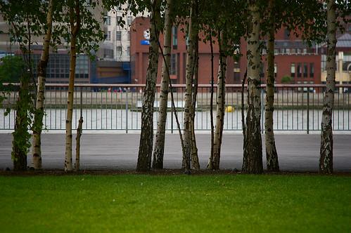 Trees & Thames