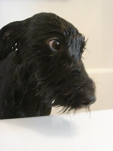 A little warm water please....