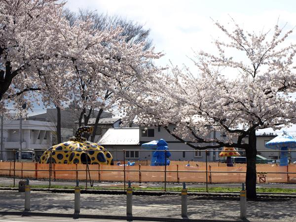 towada 2