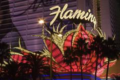 Flamingo Entrance 3