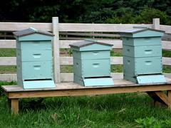Bee houses at Mast Farm Inn