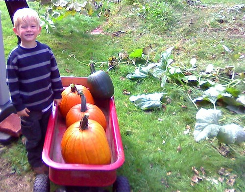 Farmer Max, with his harvest