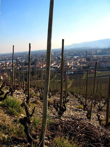 Vineyard overlooking Tain lHermitage.