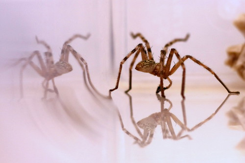 Spider Reflection Revisited