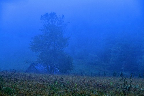 Twilights Blue Mist