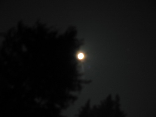 Moon with Redwood Tree