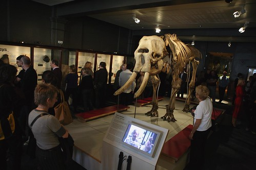 Image, Maharajah the elephant in his new location on The Manchester Gallery