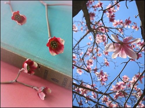 Magnolia and Dogwood Diptych