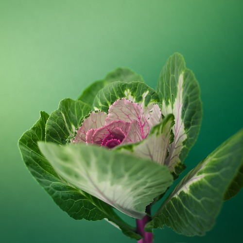Flower / Nature / Green por ►CubaGallery