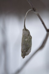 Leaf Cocoon 1
