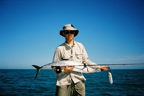 Spanish Mackerel on Fly