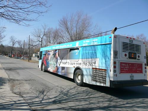 Kingston Transit Bus Advertising