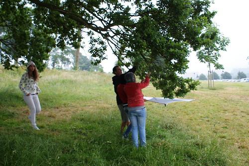 Giving the tree a good shake, Credit: Ed Drewitt