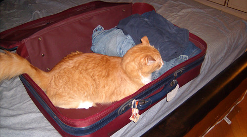20090628 - GEDC0137 - Oranjello - in suitcase