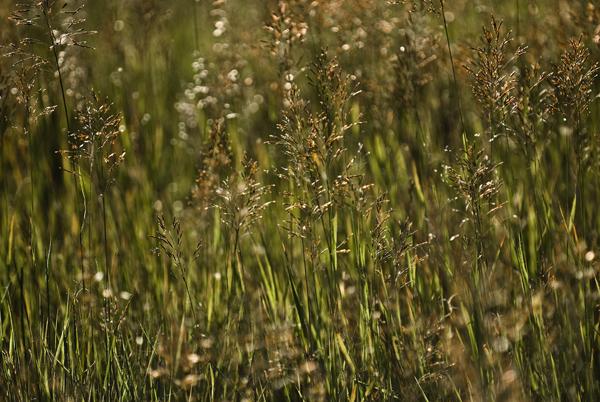 grasses near the Chewuck