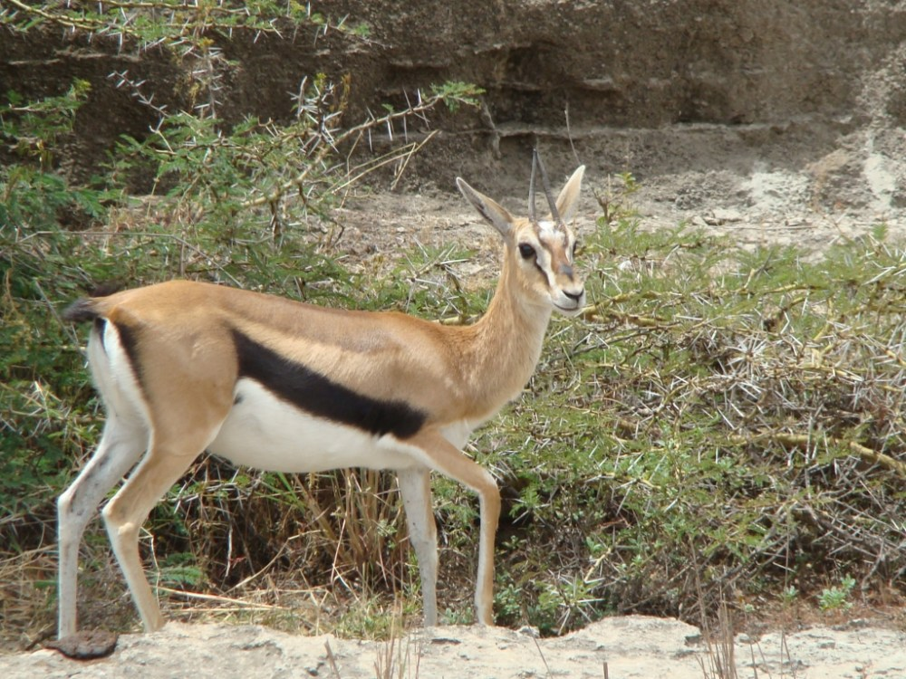 Antelopes of Nairobi National Park (2/4)