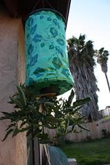 Upside down tomato plant