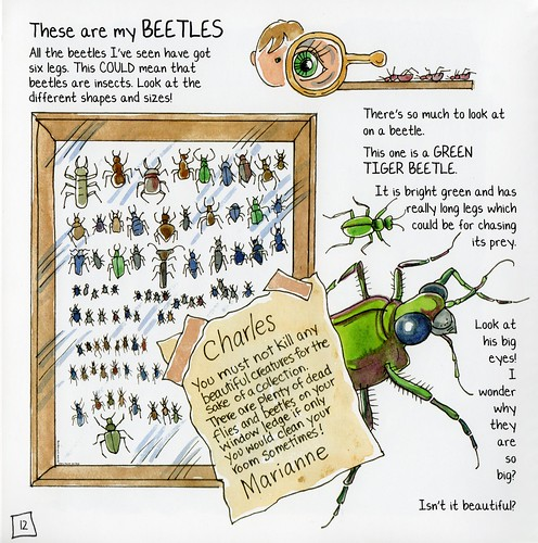 Young darwin's beetle collection