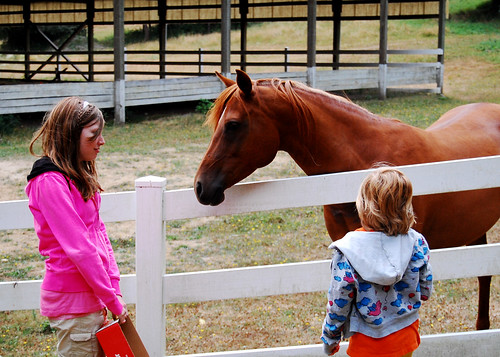Admiring the horses.